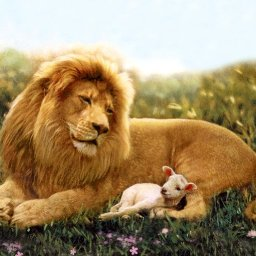 lion-and-lamb-wallpaper.JPG.jpg
