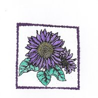5242-purplesunflower.jpeg.jpg