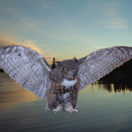6472-Owl