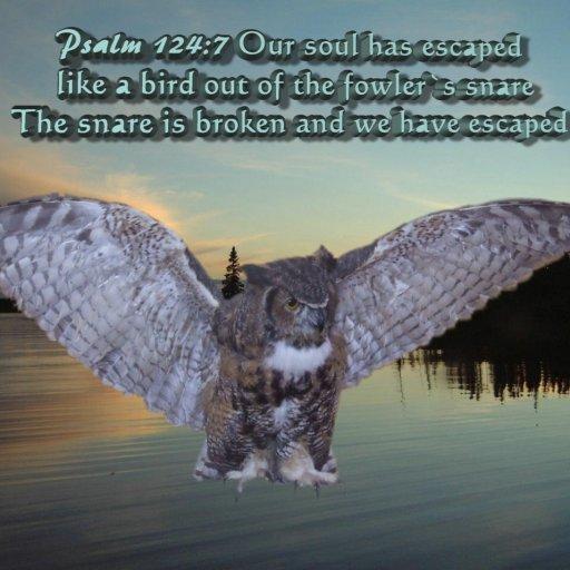 Owl Escaped