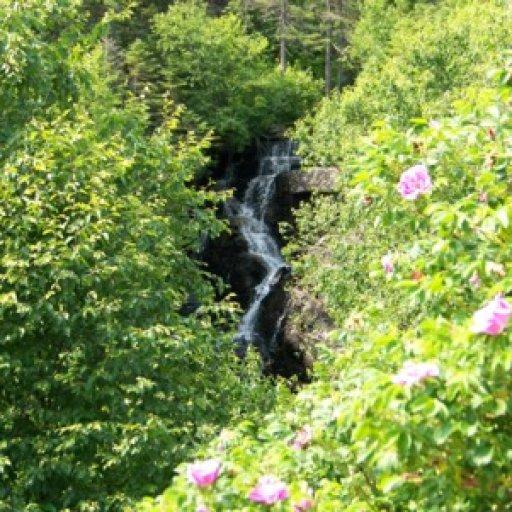 Roses & Falls