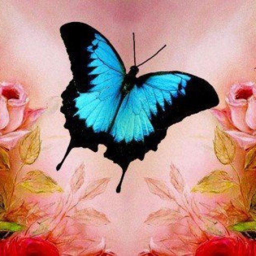 butterfly_roses