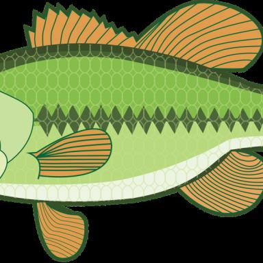 Finya the Fish